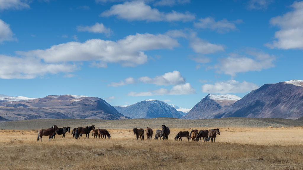 Mongolian travel agency