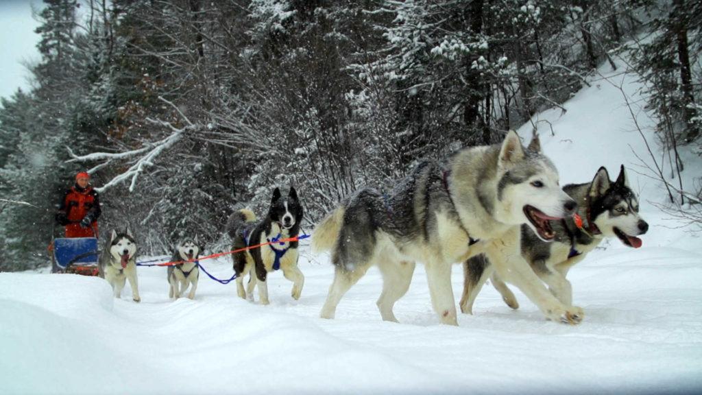 Dog sledding Mongolia