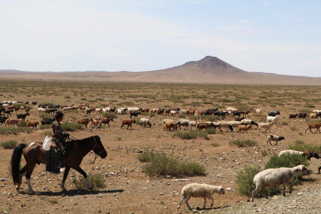 Nomads migrate or move