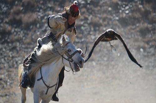 Eagle hunting Mongolia